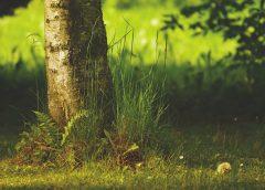 Kiedy można wyciąć drzewo w ogrodzie?
